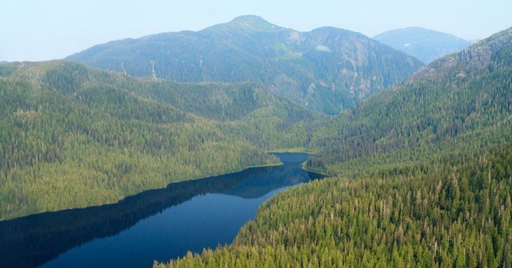 Trump wants to let loggers in to Alaska's most protected forest 1
