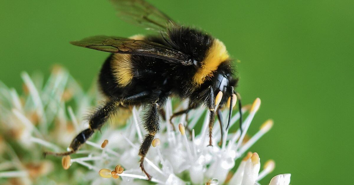 Trouble for bees