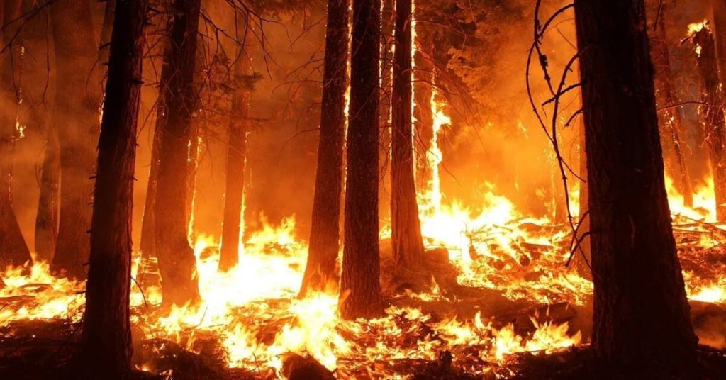 A photograph of trees burning in a wildfire