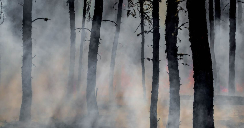 A photo of a forest fire
