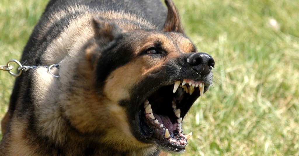 A photograph of an angry dog.