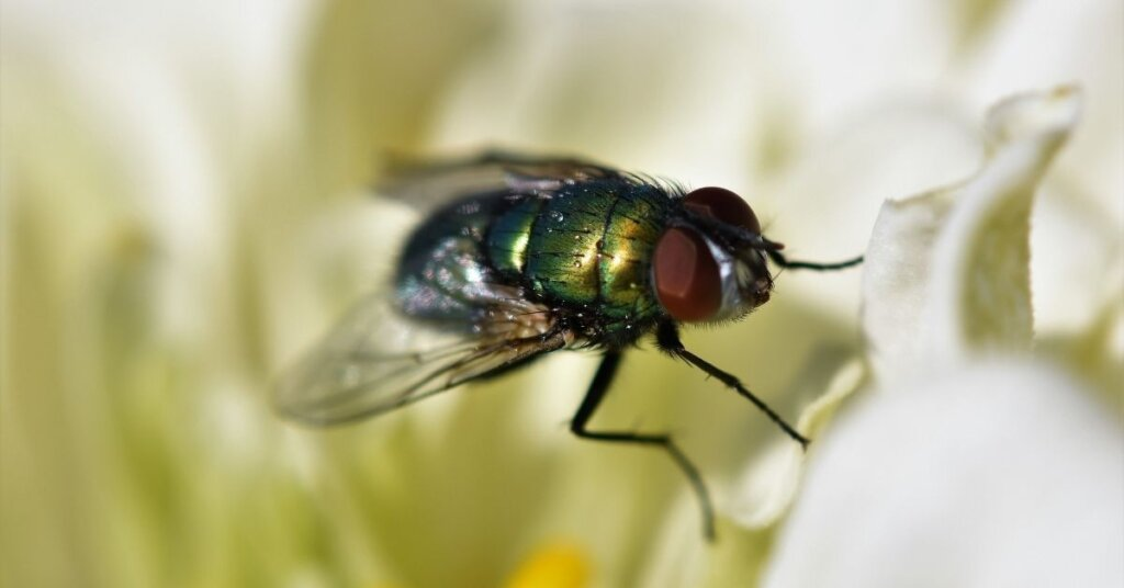 A close up photo of a house fly